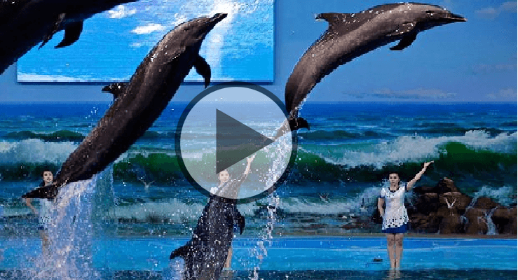 dolphin show video