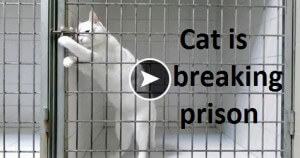 Cat Wise Animal Breaking Prison Amazing Video