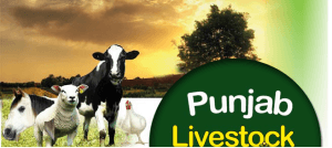 Jobs in Livestock Dairy Development Department Punjab